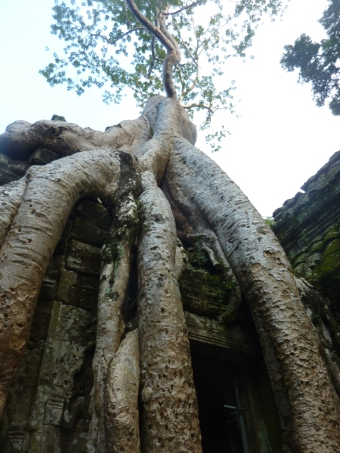 Tomb Raider tree temple
